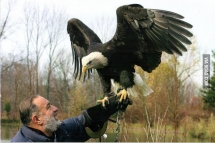 Visited my    years old grandfather cottage did not know he got a huge bald eagle